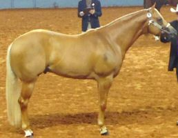 Select Bronze Aged Stallion.jpg
